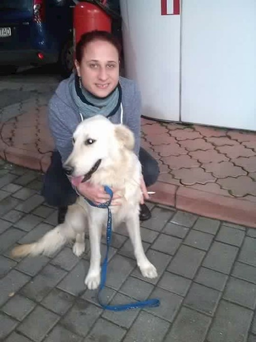 Borsos- petsitter Timișoara or Pet nanny for dogs cats
