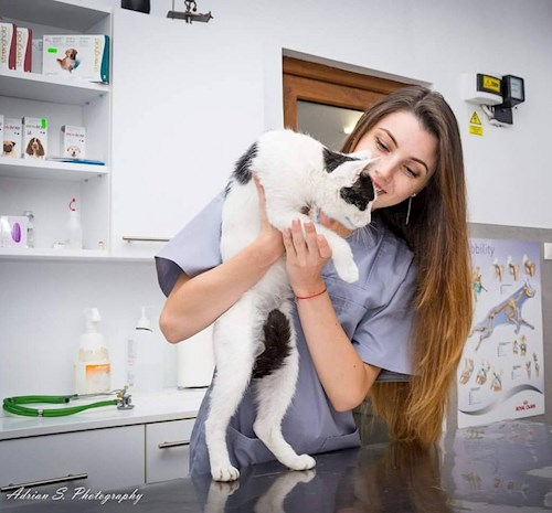 Andrada- petsitter Timișoara or Pet nanny for dogs cats