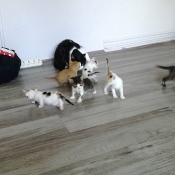 thumbnail petsitter Timișoara or pet nanny for dogs cats