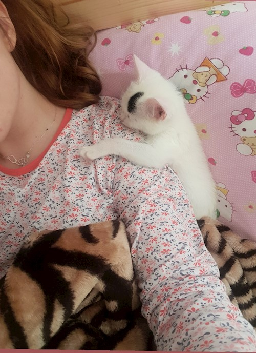 Alina Denisa Gherman- petsitter Cluj-Napoca or Pet Nanny for dogs cats