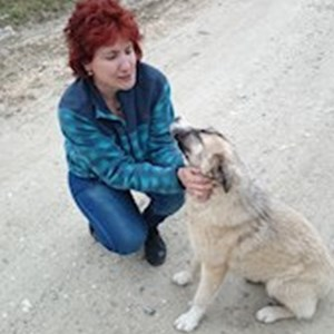 petsitter București or Pet nanny for Dogs Cats